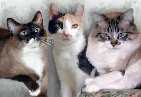Тест Какая ты кошка?