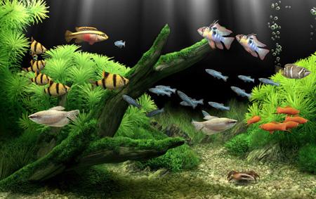 Тест Какая ты аквариумныя рыбка