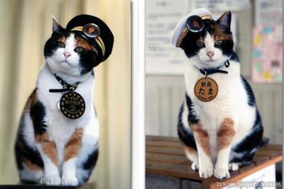 station-master-tama-the-cat_27