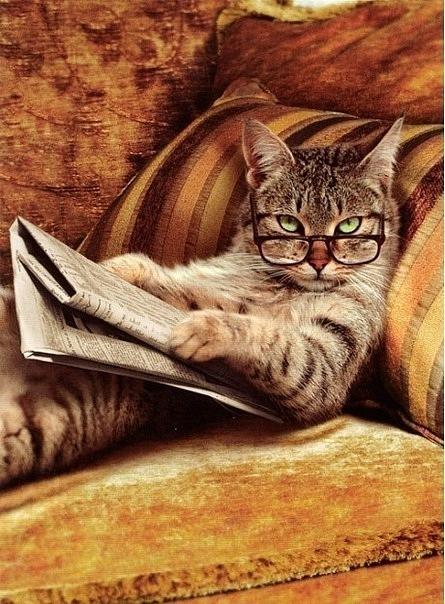 Картинка для Интересные факты о кошках!
