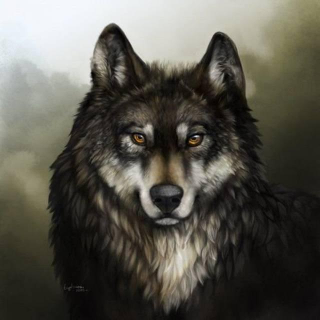 Картинка для Как хорошо ты знаешь волков?