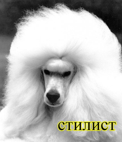 аватарки собачки: