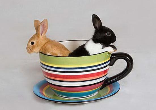 машине картинки чашки и кролика электровеников возможна любой