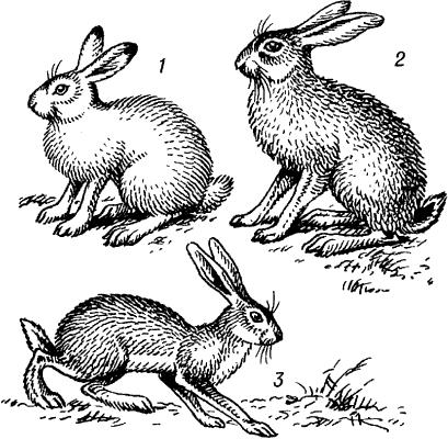 Картинка для Зайчата. Какой ты зайчик.