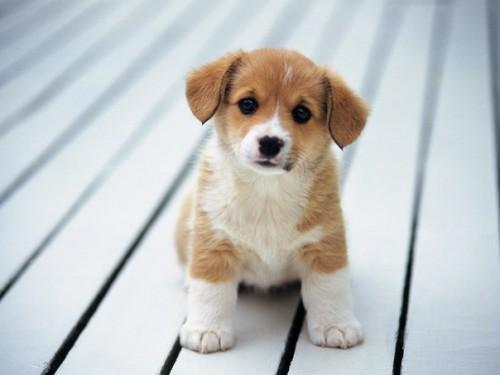 Картинка для Как хорошо ты знаешь собак?