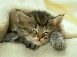 Картинка для Картинки с котятами.