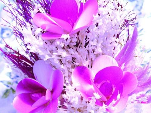 Какой вы цветок? - тест на Supersadovnik ru