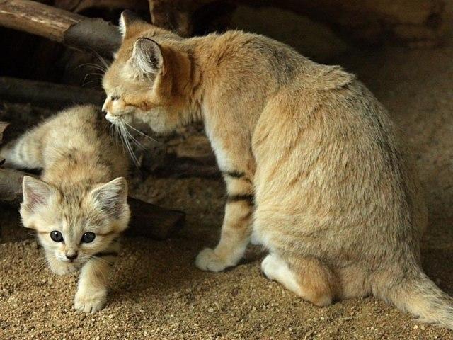 Картинка для Кто ты из котов-воителей?