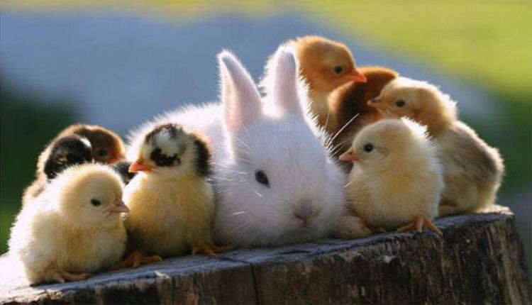 Уникальные моменты, из мира животных