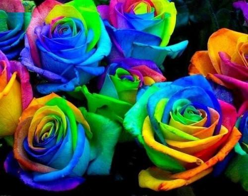 Радужные-розы