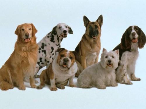 Animals___Dogs__001810_1