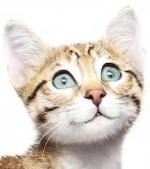 Картинка для Какая ты котейка?