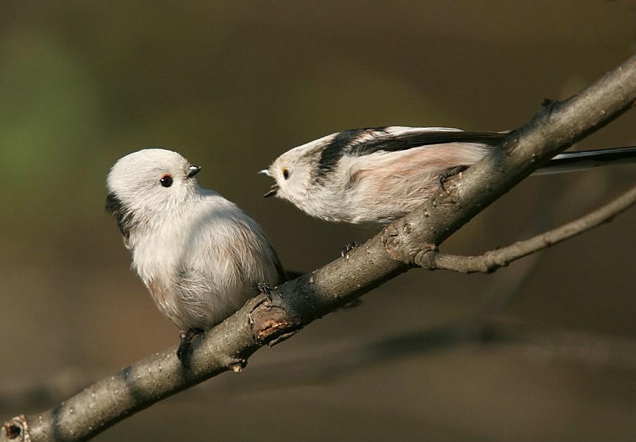 Приколы картинки птицы, днем