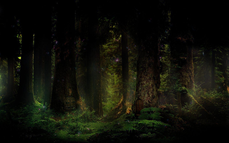 картинки густой лес часы это