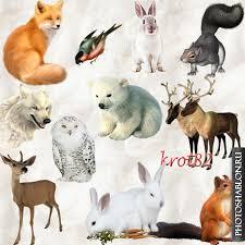 Картинка для твой характер по любимому животному