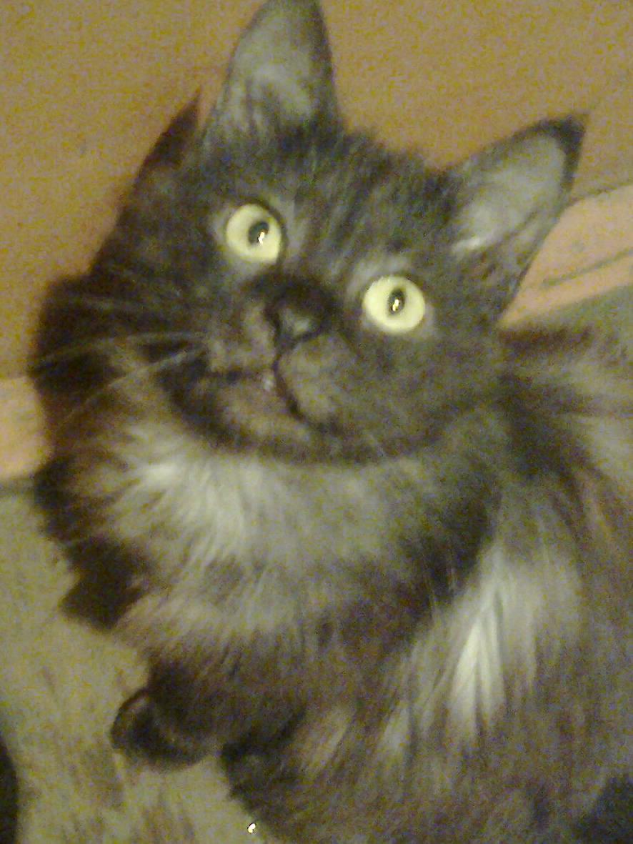 Картинка для Считает ли тебя твой кот хорошим хозяином?