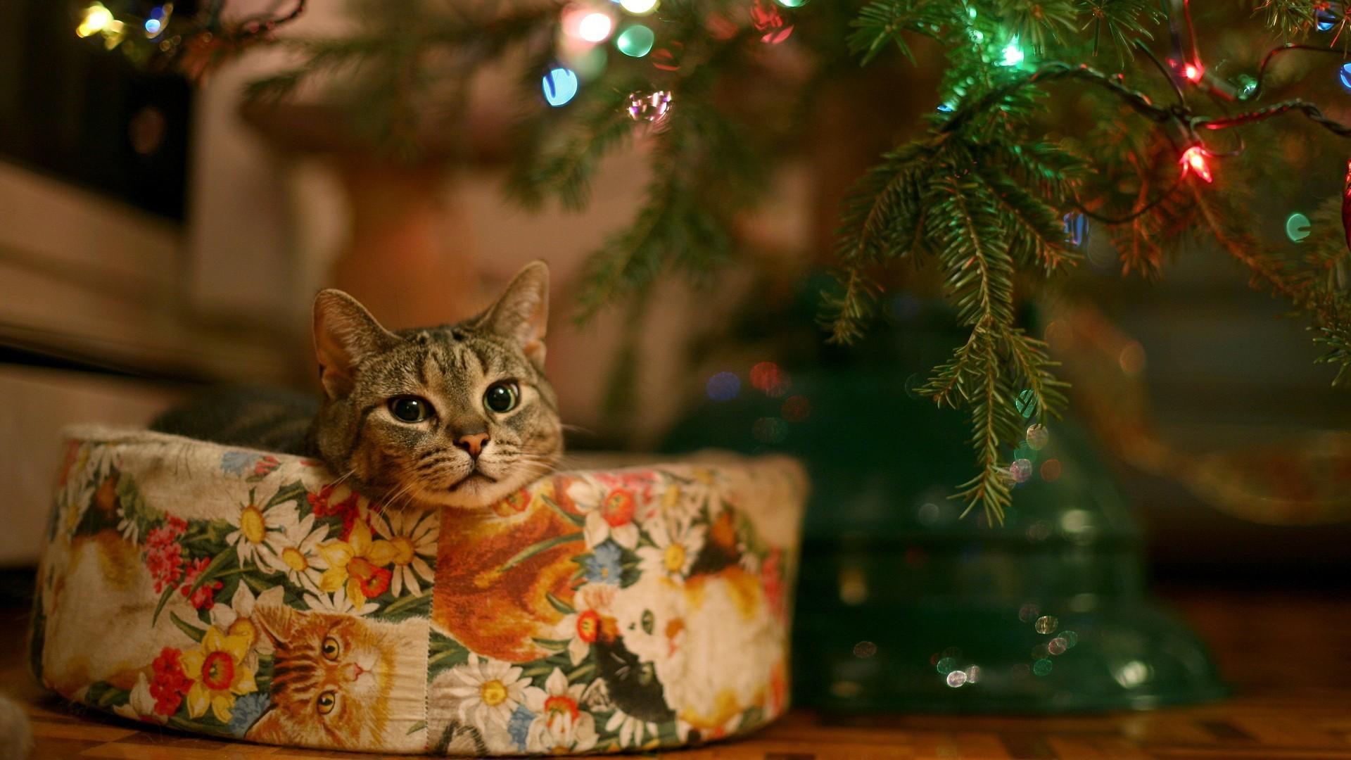 Картинка для Что ты знаешь про Новый год ? :)