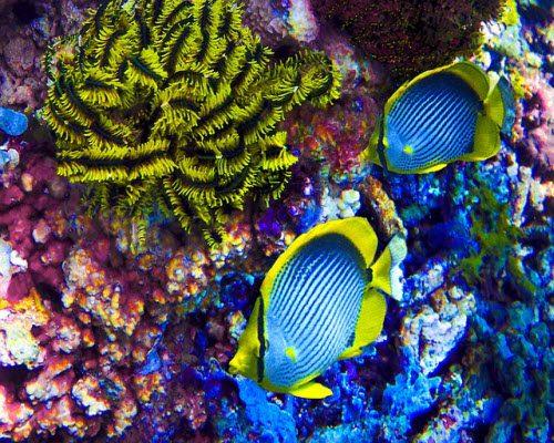 neon-fish-1290404_640