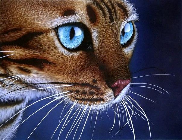 Вышивка крестом голубые глазки кошка фото