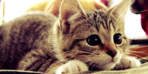кошка_понимает