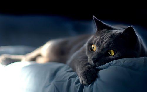 gandex.ru-26_7888_gray-cat (1)