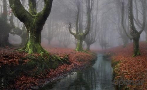 1447611617_beautiful-mysterious-forests-221__880