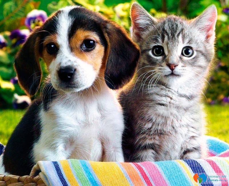 картинки с собаками и кошками красивые породистые приезжают переплачивают ваш
