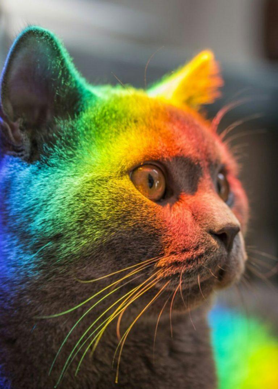 разноцветные кошки фото много интересной
