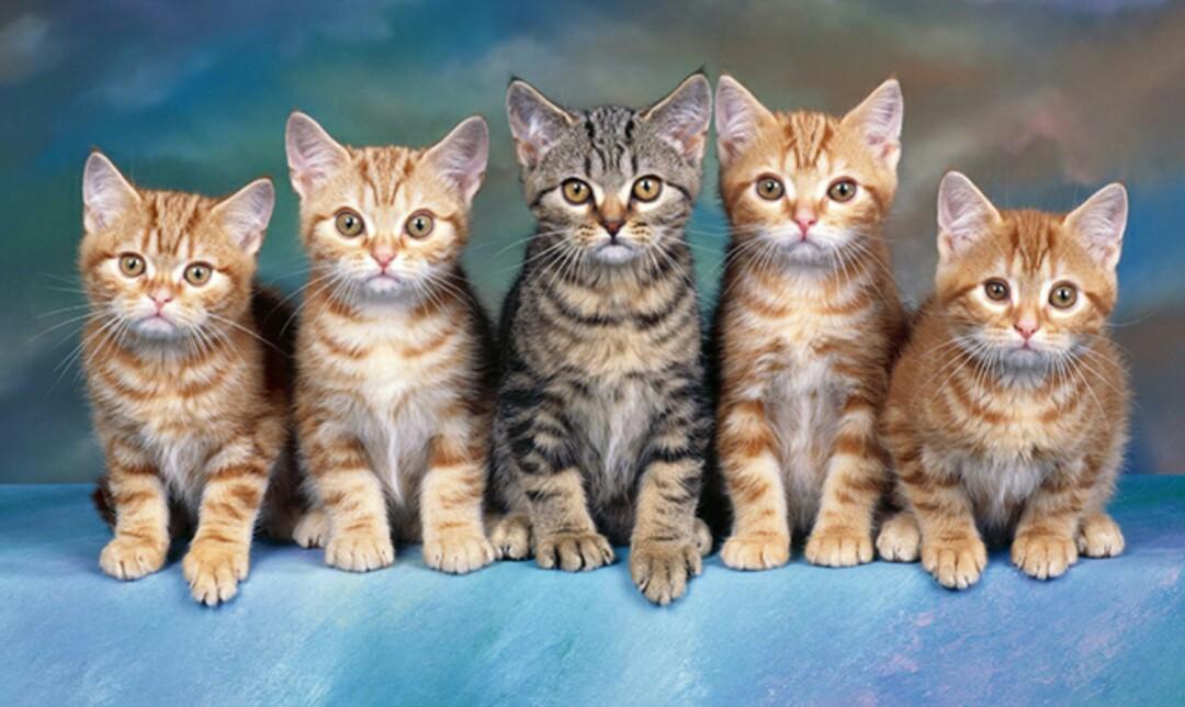 Картинка для You cat