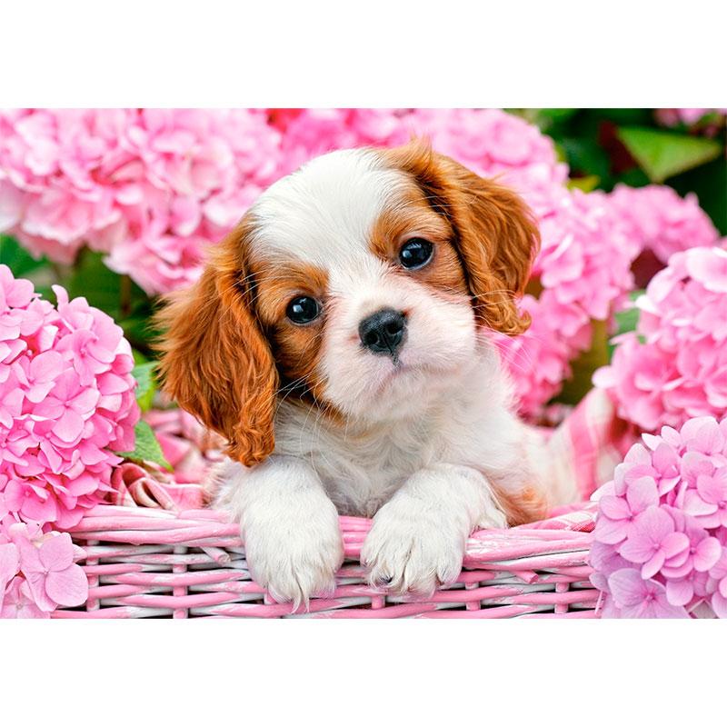 Картинка для няшные картинки с собачками:)