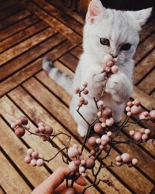 Картинка для Факты о Кошках)