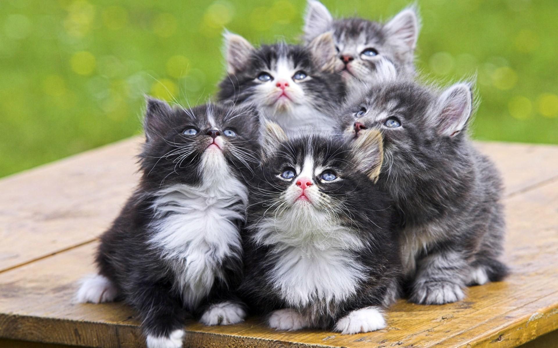 можно картинки котов несколько раз