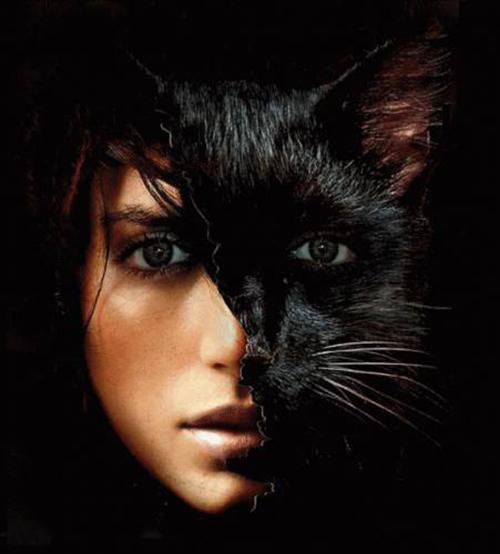 Картинка для Ведьма-кошка