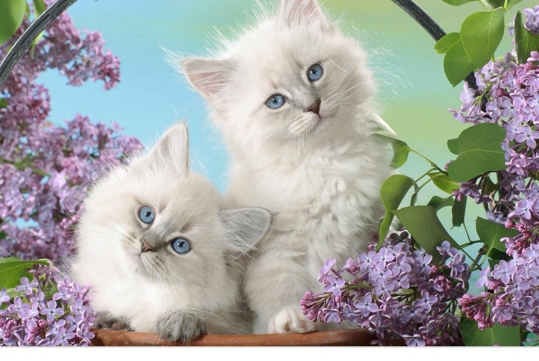 Картинка для Из жизни котиков…