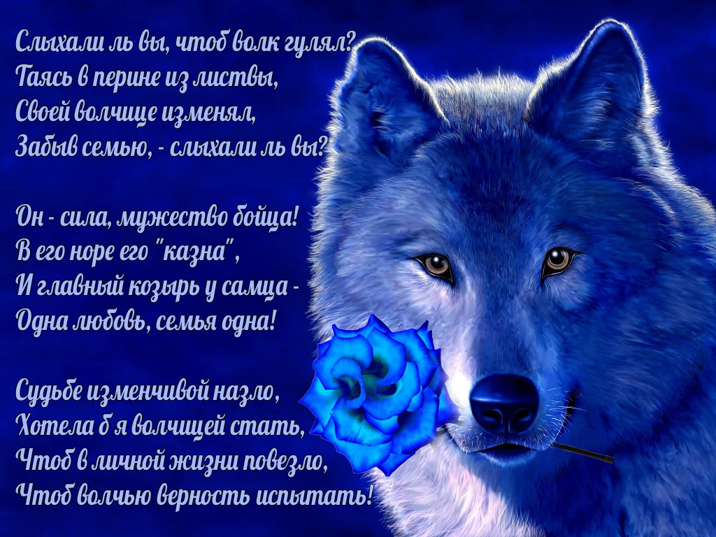 Стихи про волка картинки