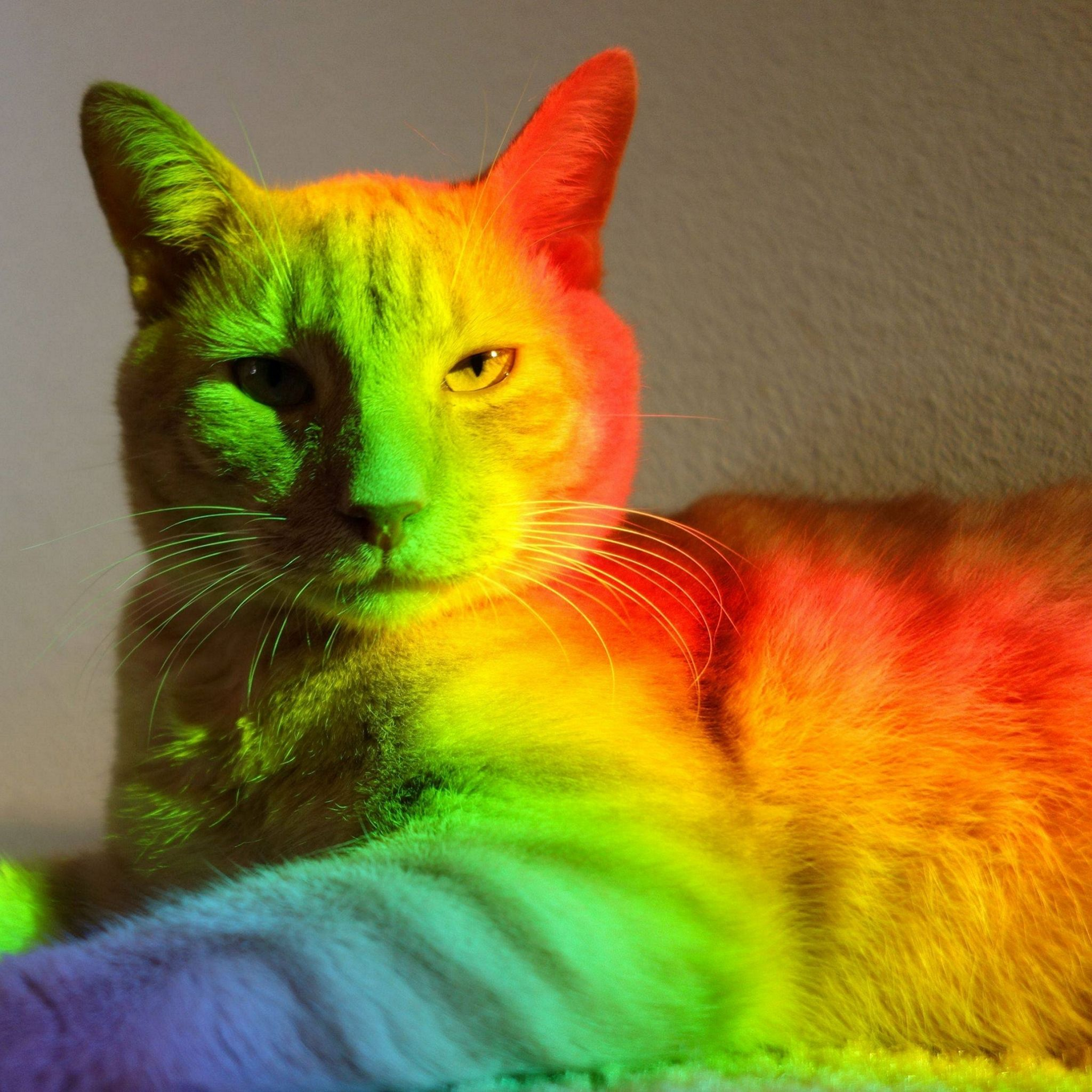 Картинки каким цветом бывают кошки