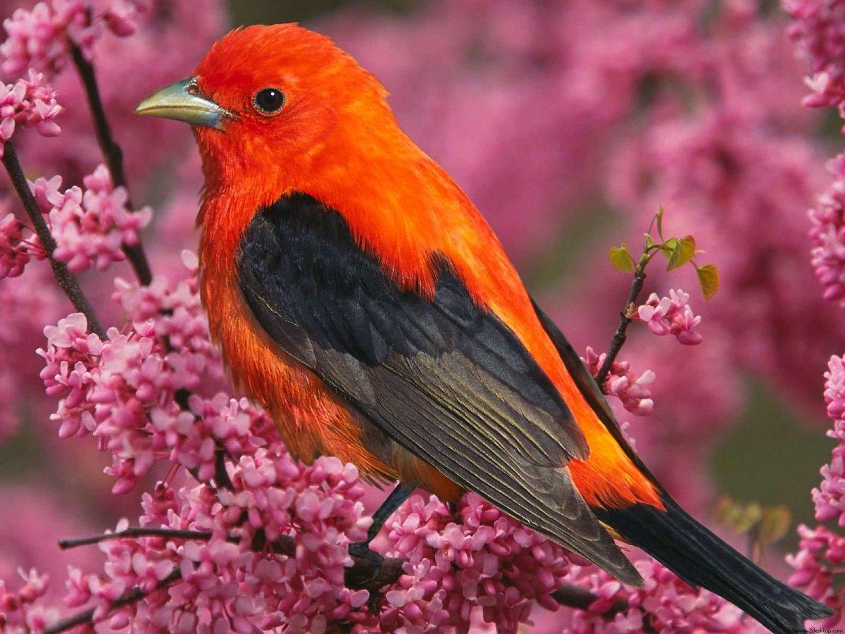приснились красивые птицы яркие разных цветов