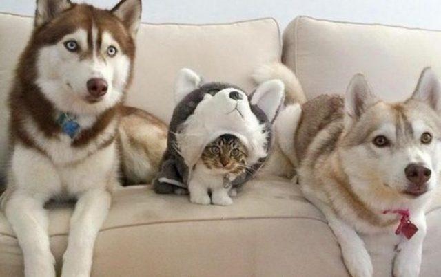 Картинка для Кошка или собака? Кто подойдёт тебе больше?