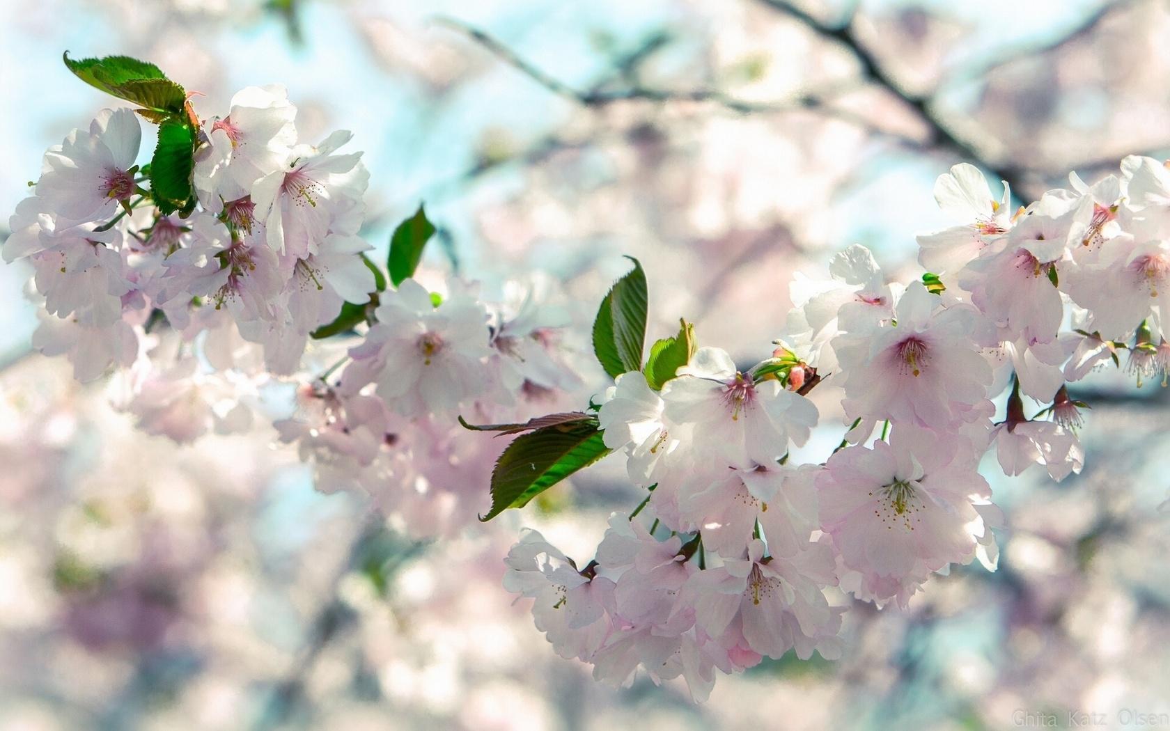 при картинки весна в очень высоком разрешении привлекает необычная форма