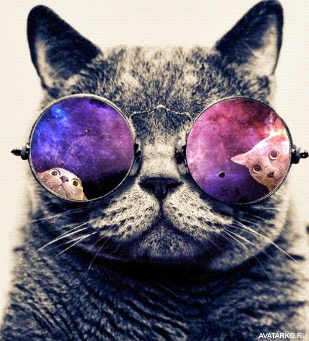 Картинка для Найди котика ❤