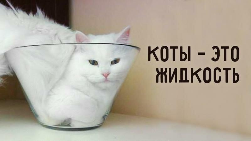 Картинка для Учёные доказали, что Коты- это жидкость!