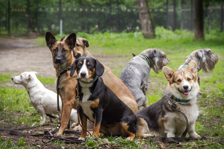 Картинка для Триккисты, как породы собак