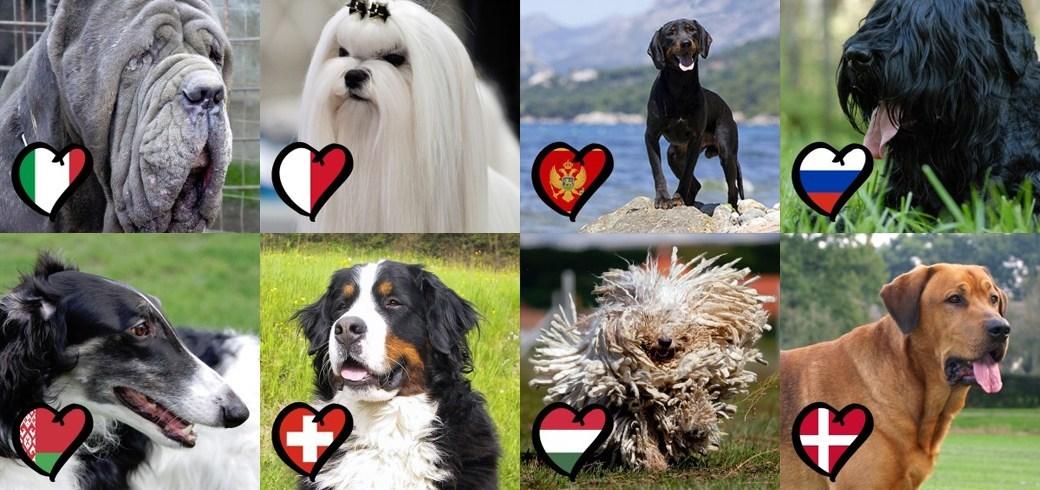 Картинка для Всё о породах собак.