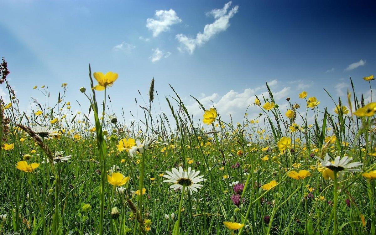 Картинка для Твой полевой цветок по знаку зодиака🌷