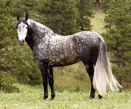 Картинка для Какая ты лошадь по знаку зодиака