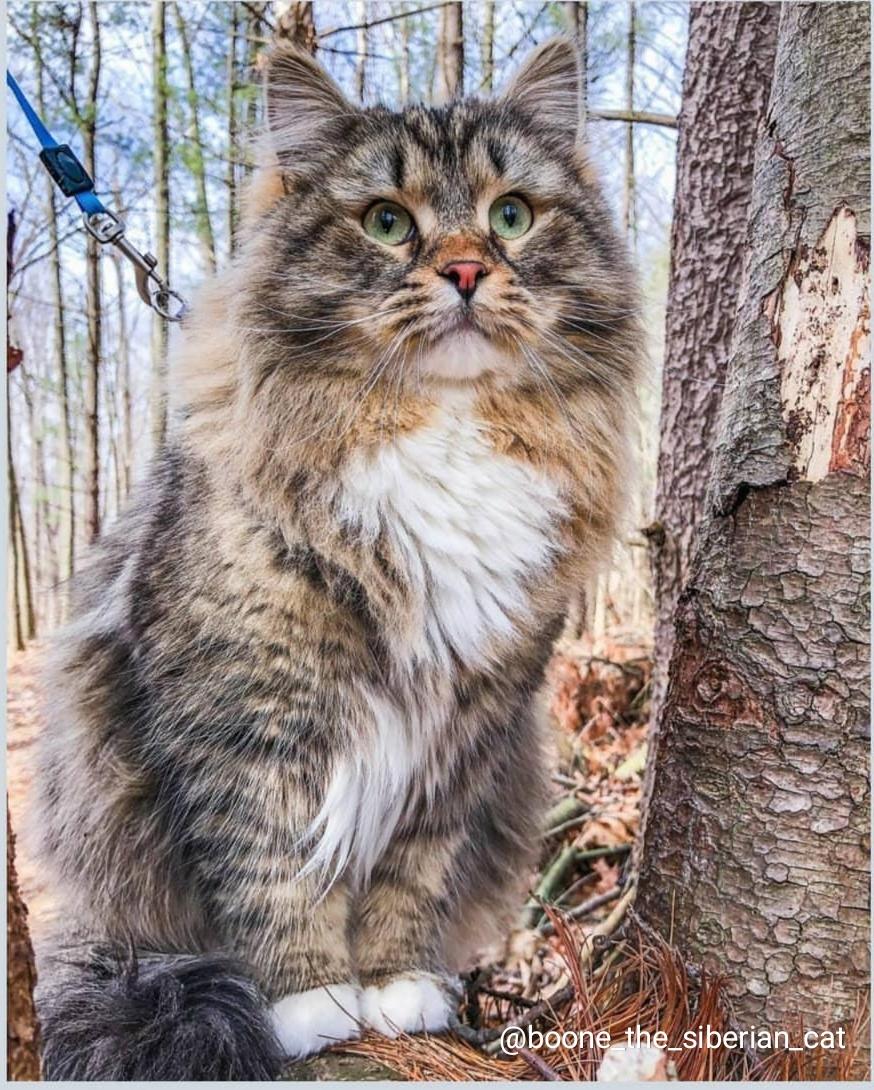 Картинка для Популярные кошки Инстаграма