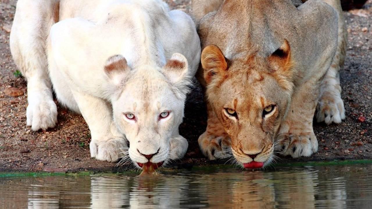 Картинка для Красивые животные альбиносы