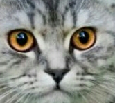 Картинка для Анкета кота-воителя