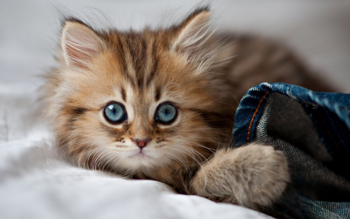 забывай картинки котиков милых и няшных фото