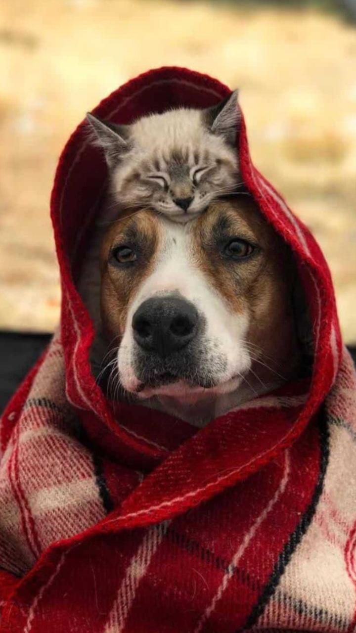 Картинка для Лучшие породы котов для каждого знака зодиака